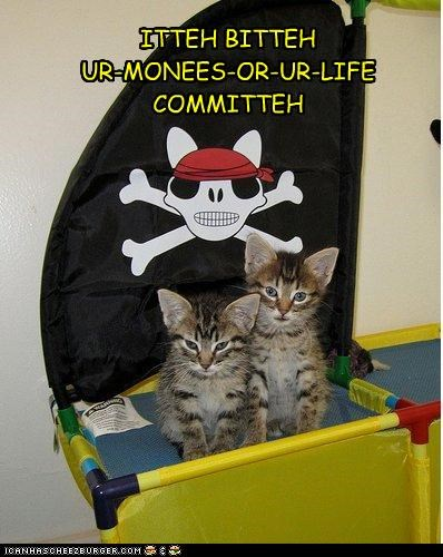 cute ibkc kitten pirates threats - 3598160896