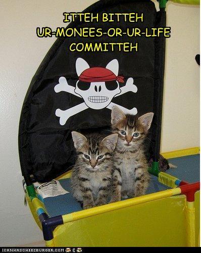 cute ibkc kitten pirates threats - 3598160896