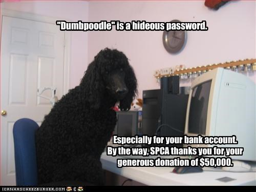 """""""Dumbpoodle"""" is a hideous password. Especially for your bank account. By the way, SPCA thanks you for your generous donation of $50,000."""