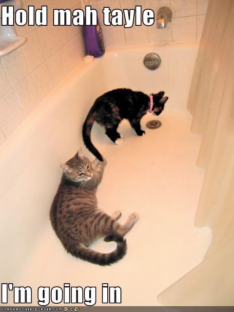bath,tail