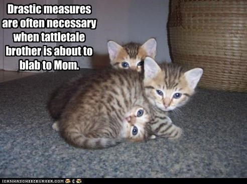 cute,Hall of Fame,kitten,momcat,squishing