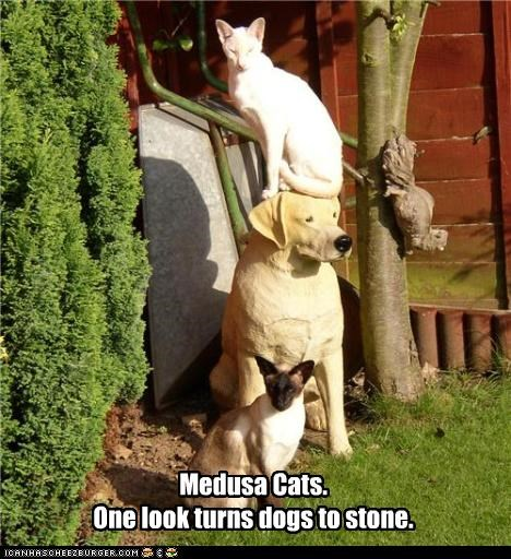 dogs magic medusa stone - 3599658752