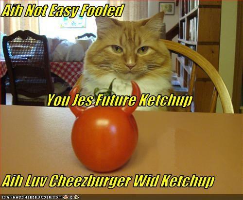 Cheezburger Image 3599709696