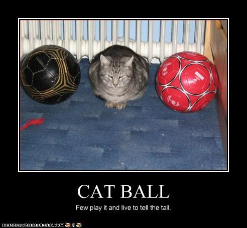 CAT BALL Few play it and live to tell the tail.