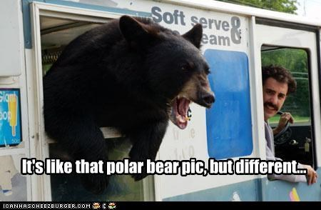 It's like that polar bear pic, but different...