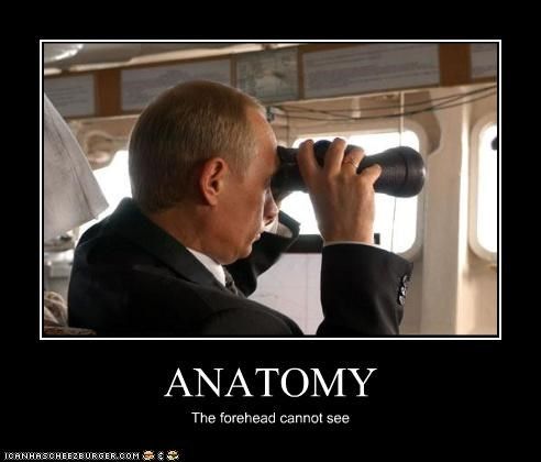 ANATOMY The forehead cannot see