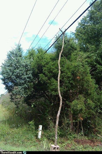 branch,electrical hazard,outdoors,propped up,tax dollars at work