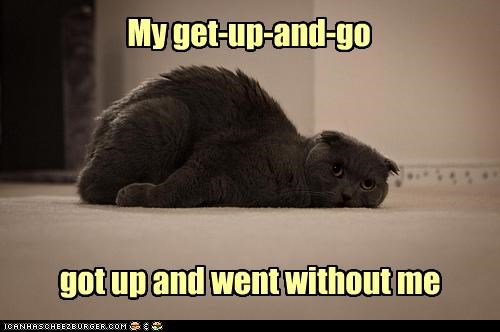 caption captioned cat exhausted explanation get up go Hall of Fame lazy literalism tired - 3600765696
