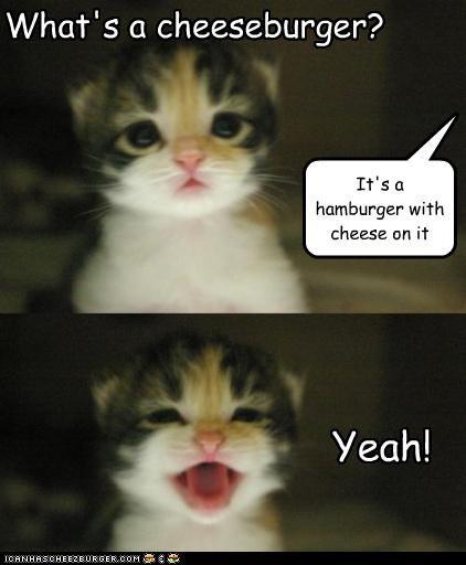 Cheezburger Image 3601610496