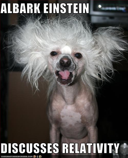 albert einstein,best of the week,chinese crested,crazy hair,physics,relativity,science,talking