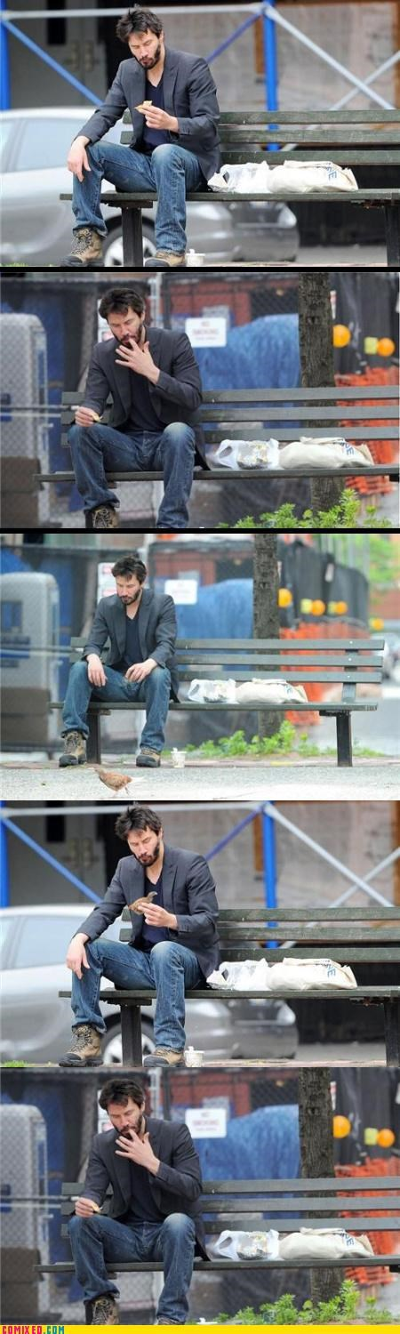 animals birds celebutard keanu reeves nom nom nom sad keanu - 3604631296