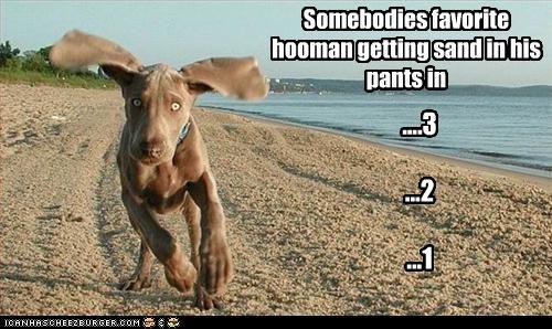 Somebodies favorite hooman getting sand in his pants in ....3 ...2 ...1