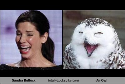 actress,animals,laughing,Owl,Sandra Bullock