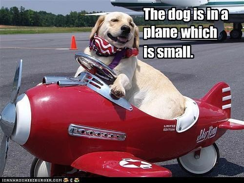 The dog is in a plane which is small.