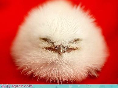 bird fluff mystery monday - 3609081600