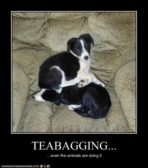 TEABAGGING... ....even the animals are doing it