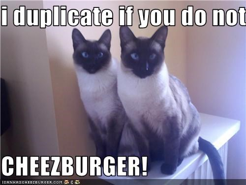 Cheezburger Image 3611055104