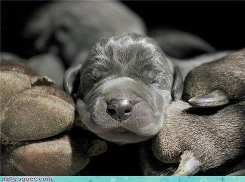cute face puppy - 3611692800