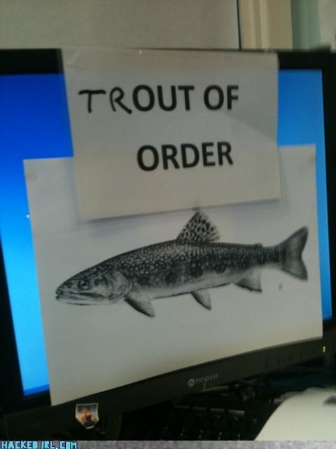 fish - 3612163840