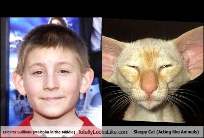 actor,animals,erik per sullivan,malcolm in the middle,Sleepy Cat,TV
