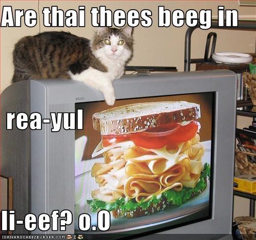 Cheezburger Image 3613136384