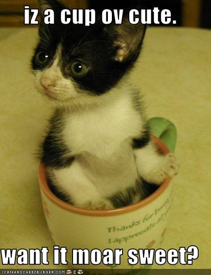 iz a cup ov cute.  want it moar sweet?