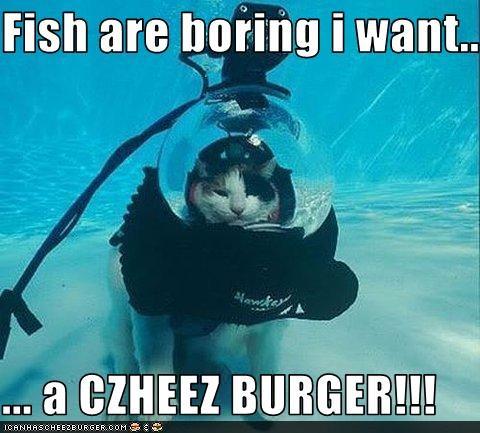 Cheezburger Image 3613625856