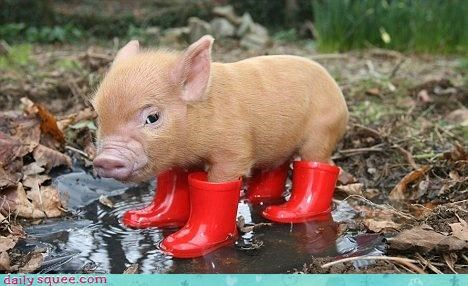 costume,i-was-going-to-make-a-little-boots-joke-but-thought-it-was-too-obscure,pig