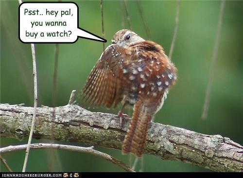 lolbirds psst watch - 3615728640
