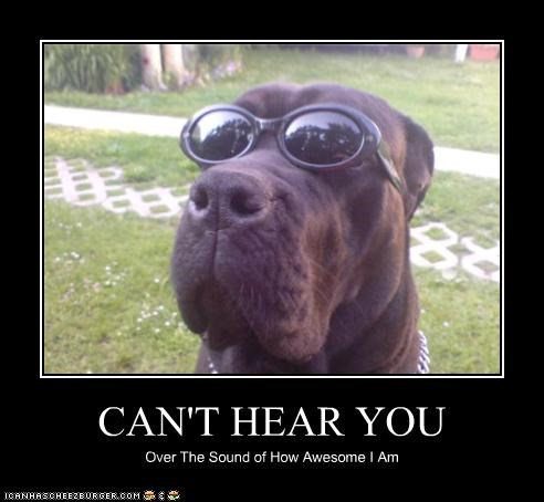 awesome,mastiff,outside,sunglasses