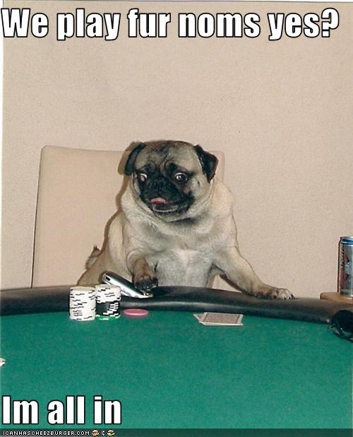 bet cards gamble poker pug