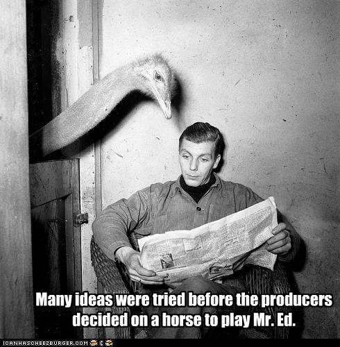 animal funny ostrich Photo TV - 3618131712