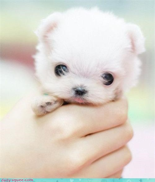 face puppy squee - 3618280192