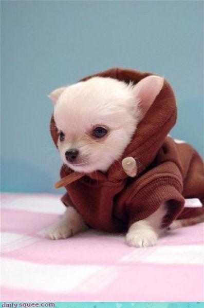 nerd jokes puppy star wars - 3618281728