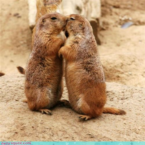 face,gossip,prairie dog