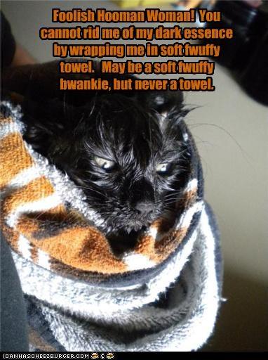 basement cat do not want towel - 3618322688
