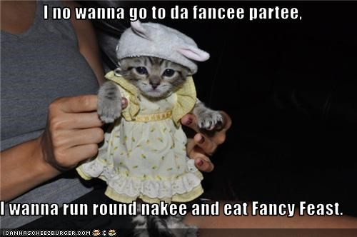 costume cute do not want fancy feast Hall of Fame kitten Party - 3618392832