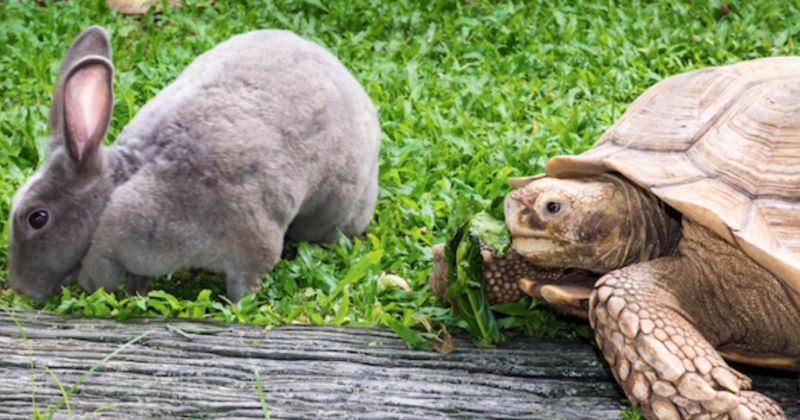 Watch a tortoise and a hare race in an amazingly entertaining video.