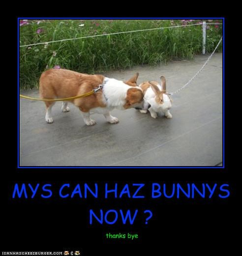 MYS CAN HAZ BUNNYS NOW ? thanks bye