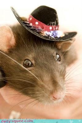 costume hat rat - 3619643648
