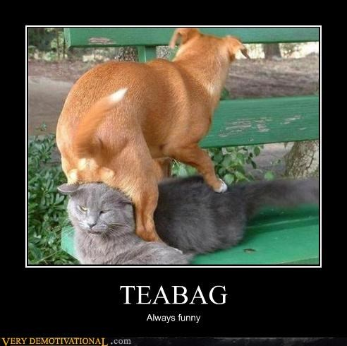 animals,anthropomorphizing,balls,cat,dogs,funny,hilarious,scrotum,teabag