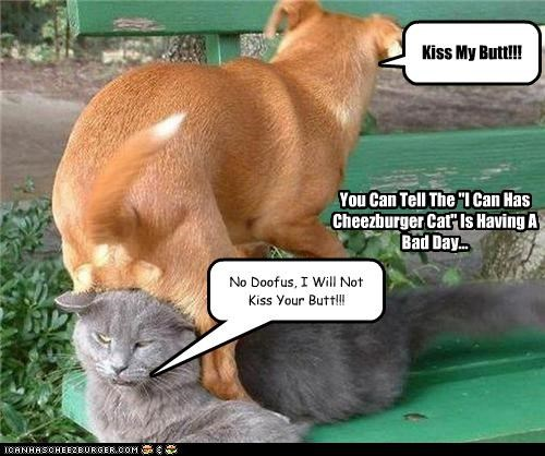 """Kiss My Butt!!! No Doofus, I Will Not Kiss Your Butt!!! You Can Tell The """"I Can Has Cheezburger Cat"""" Is Having A Bad Day..."""
