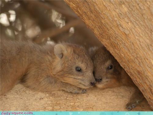 bear weasel whatsit wednesday - 3621263872