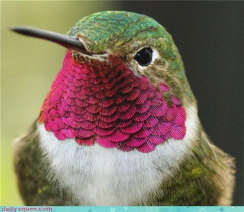 close up face humming bird - 3621264128