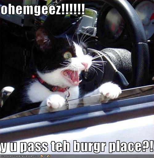 Cheezburger Image 3621319424