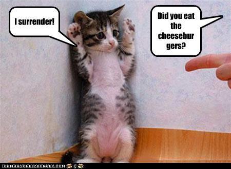 Cheezburger Image 3621826048