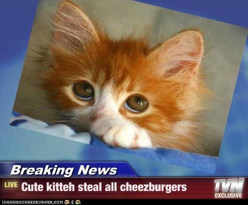 Cheezburger Image 3622196736