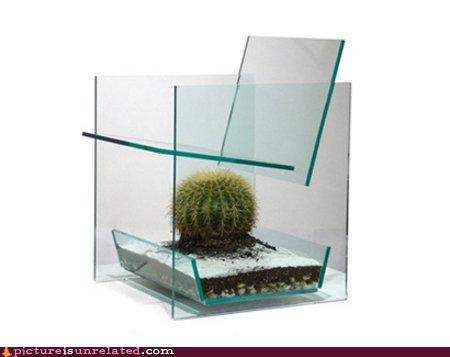 cactus chair glass mother in law wtf - 3623322624