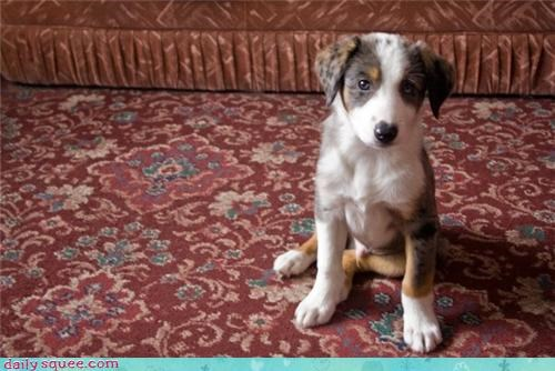 carpet,face,puppy
