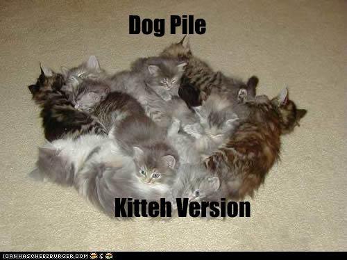 Dog Pile Kitteh Version